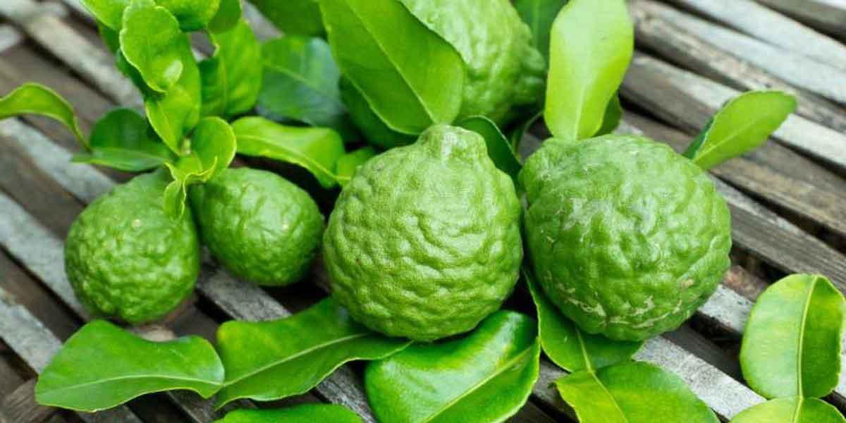 bergamot-green