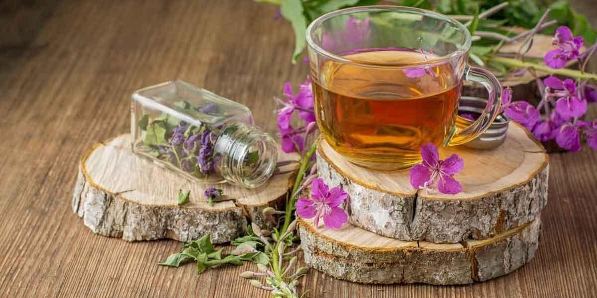 ivan-chai-lekarstvo